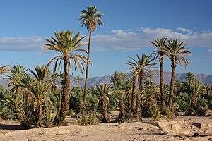 Skoura - Image: Skoura, Morocco (8141949160)