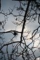 Sky Tree (5254574255).jpg
