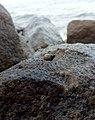 Snail in rock.jpg