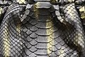 Snake Skin Texture (17).jpg