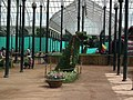 Snap from Lalbagh Flower Show Aug 2013 7859.JPG
