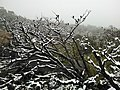 Snow Fall on Mount William Range, Grampians 1.jpg
