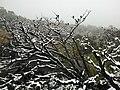 Snow Fall on Mount William Range, Grampians 1.jpg