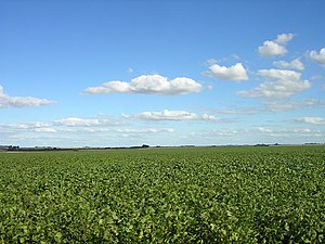 Economy of Argentina - Soy field in Argentina's fertile Pampas. The versatile legume makes up about half the nation's crop production.