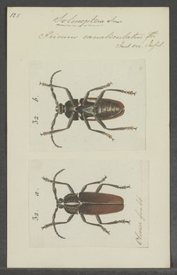 Solenoptera - Print - Iconographia Zoologica - Special Collections University of Amsterdam - UBAINV0274 032 06 0018.tif