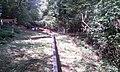 Sommerrodelbahn in Gackenbach im Wald - und Freizeitpark Westerwald - 9.jpeg