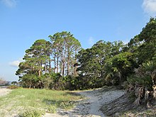 A section of South End Trail passes through a sandy beach plant community and continues into a pine-dominated forest.