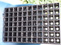 Sowing tray 7x11.JPG