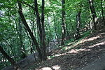 Sparrow Hills Forest.jpg