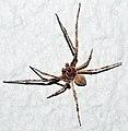 Spider in Augsburg.jpg