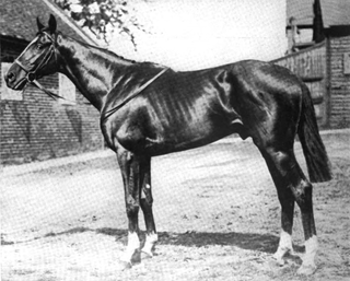 Spion Kop (horse) Irish-bred Thoroughbred racehorse