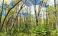Spring Leaf-Out (4) (14292778963).jpg
