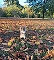 Squirrel Zinnia Janif.jpg