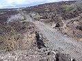 Starr-030716-0035-Nicotiana glauca-Kings Hwy-Kanaio-Maui (24269589299).jpg