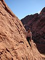 Starr-071222-0269-Erodium cicutarium-habitat with Kim climbing-Cow Lick Crag Calico Basin-Nevada (30707065213).jpg