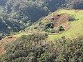 Starr-091217-0677-Andropogon virginicus-aerial view habitat and zipline-Piiholo-Maui (24874345852).jpg