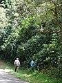 Starr 070328-6183 Syzygium jambos.jpg