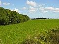 Stead Combe - geograph.org.uk - 43975.jpg