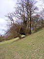 Steep Field - geograph.org.uk - 1225611.jpg