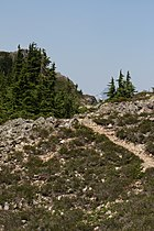 Stillaguamish Peak 5534.JPG