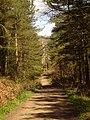 Stony Down Plantation, Corfe Mullen - geograph.org.uk - 370818.jpg