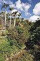 Sueyoshi Park Naha Okinawa Japan02s3.jpg