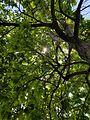 Sun shinning through trees.jpg
