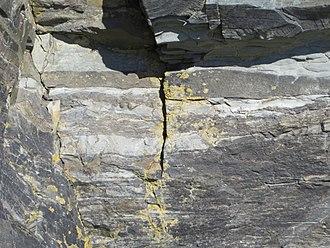 Treptichnus pedum - Treptichnus pedum fossil marking the Cambrian-Ediacaran GSSP