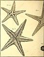 Tableau encyclopédique et méthodique des trois règnes de la nature (1791) (14767808512).jpg