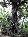 Tadasu no mori 200906d.jpg