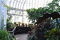 Talcott Greenhouse VI.JPG