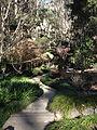 Tamborine Mountain Botanic Gardens 12.JPG