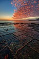 Tessellated Pavement Sunrise Portrait.jpg