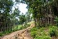 Thailand - Koh Phangan (25012823261).jpg