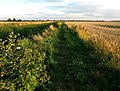 The Burstwick to Hedon Bridleway - geograph.org.uk - 1414505.jpg