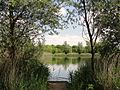 The Fishing Lake in Bedfont Lakes Parkland - panoramio.jpg
