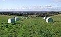 The Minster Way, Kilnwick Percy - geograph.org.uk - 588918.jpg