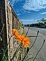 The Orange Flower.jpg