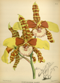 The Orchid Album-02-0096-0079.png