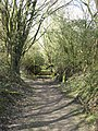 The Path runs through some light woodland, College Lake - geograph.org.uk - 1226791.jpg