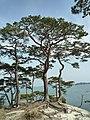 The Pine Island(松の島) - panoramio.jpg