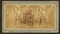 The Wilderness, where Major Dade and 107 of his men were massacared, from Robert N. Dennis collection of stereoscopic views.png