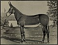 The breeding and rearing of jacks, jennets and mules (1902) (20223905110).jpg