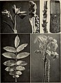 The tree book - A popular guide to a knowledge of the trees of North America and to their uses and cultivation (1920) (14782895745).jpg