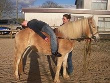 Un enfant allongé à l'arrière sur le dos d'un poney
