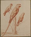 Three Parrots MET 1984.391.jpg