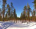 Tikkakoski ski track 2.jpg
