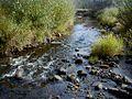Tirza pie Pērles - Liezeres ceļa 2001-09-21 - panoramio.jpg