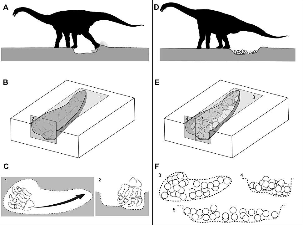 Titanosaur nesting