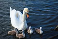 Todd Huffman - Swan Lake (by).jpg